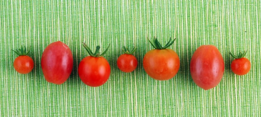 Tomatoes, Tomatoes GaloreSalad